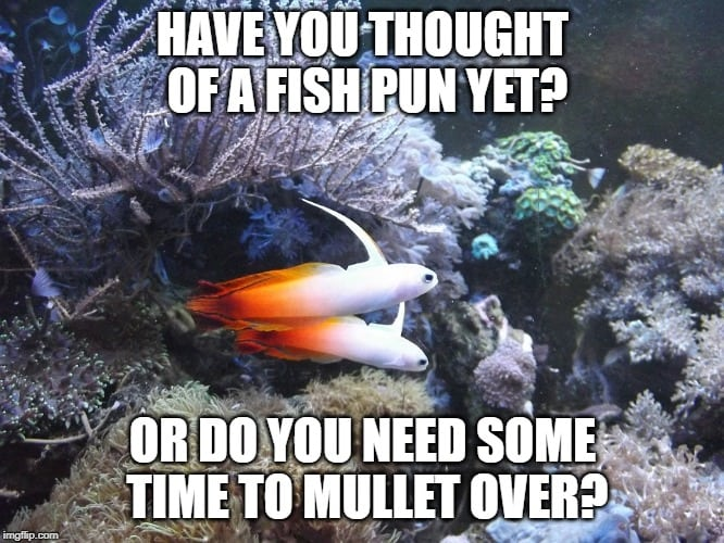 2020 S Best Funny Fish Puns Memes And Fishing One Liners Nano Reef Adviser