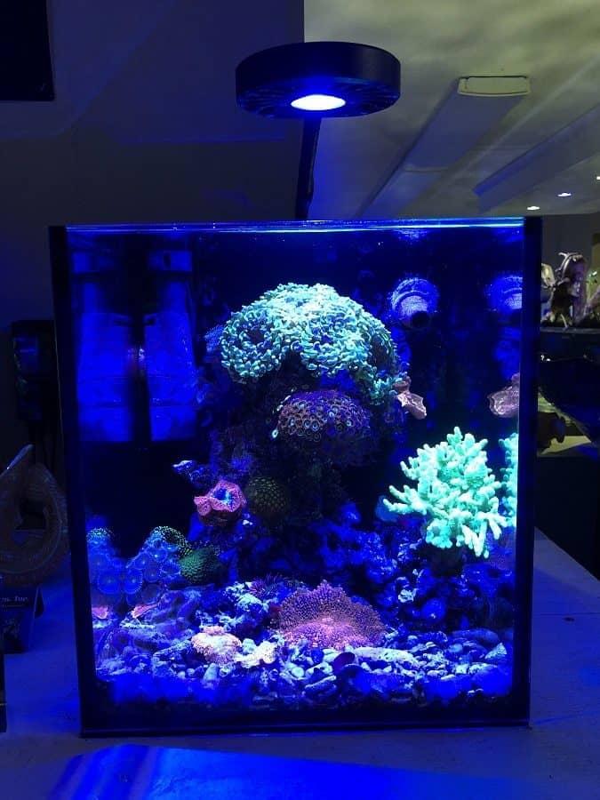 Nano Reef Lighting Don T Make Everyone Else S Mistakes